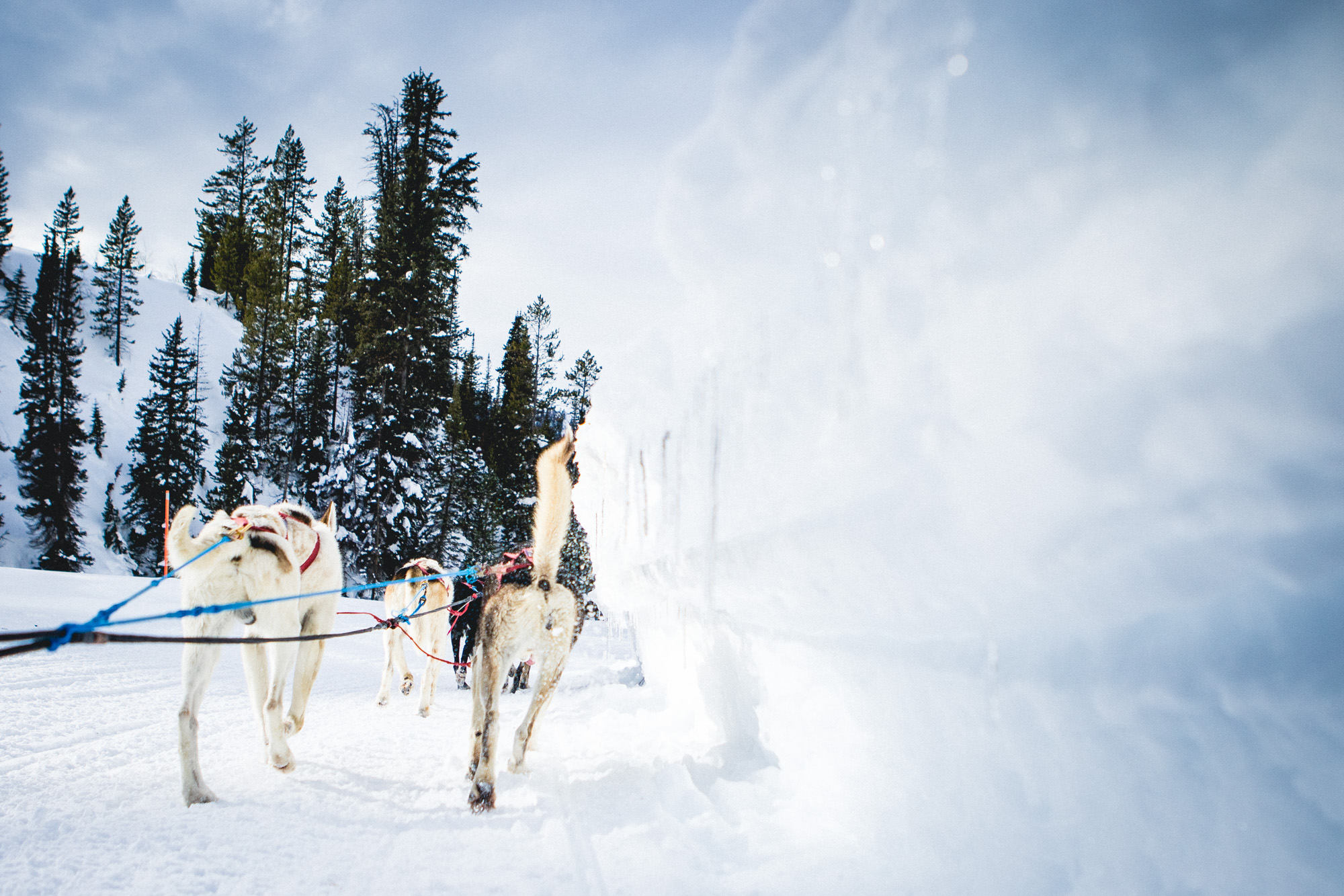 Dog sled tours in Jackson Hole, WY and Yellowstone
