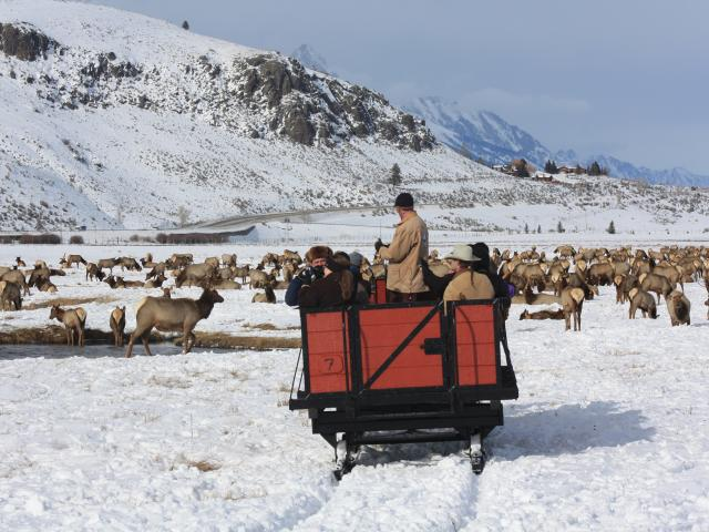 Elk refuge sleigh ride