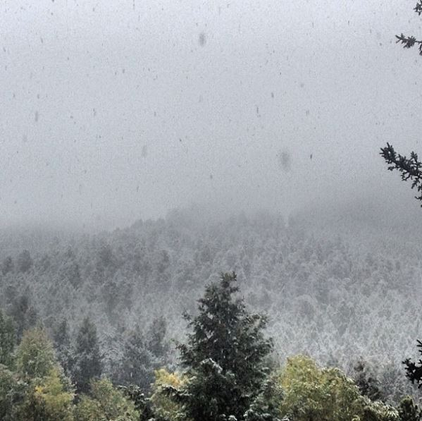 Snowing on Pine Trees in the fall in Jackson Hole, Wyoming